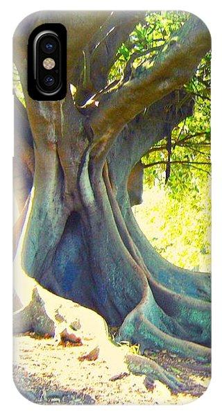 Morton Bay Fig Tree IPhone Case
