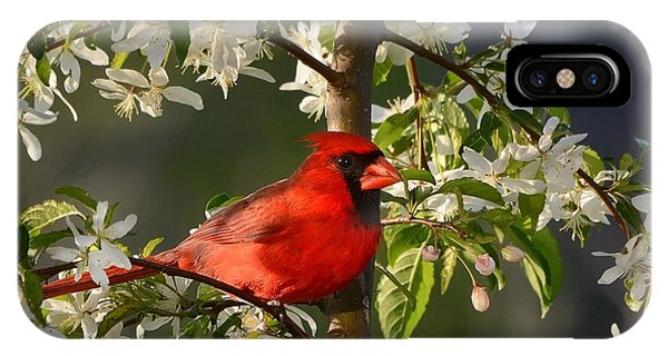 Red Cardinal In Flowers IPhone Case