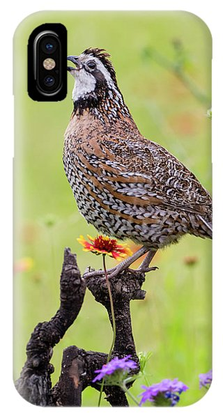 Northern Bobwhite, Colinus Virgianus Phone Case by Larry Ditto