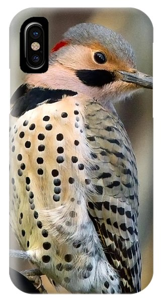 Northern Flicker iPhone Case - Northern Flicker by Bill Wakeley
