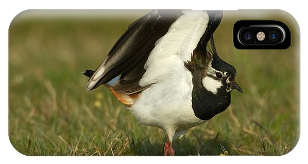 Northern Lapwing IPhone Case