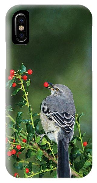 Alive iPhone Case - Northern Mockingbird (mimus Polyglottos by Richard and Susan Day