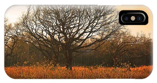 Oak Tree In A Field IPhone Case