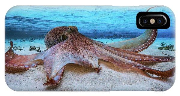 Surface iPhone Case - Octopus by Barathieu Gabriel