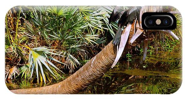 Boynton iPhone Case - Oriental Darter Anhinga Melanogaster by Panoramic Images