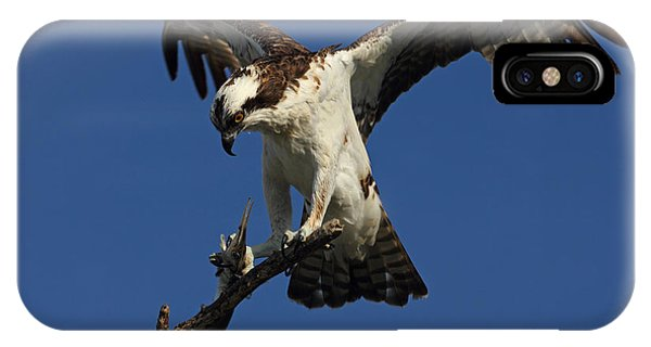 Osprey With A Fish Photo IPhone Case