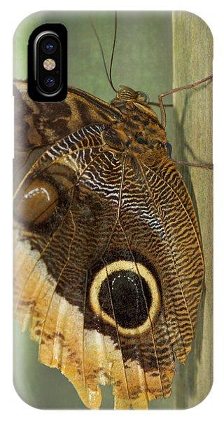 Belize iPhone Case - Owl-eye Butterfly (caligo by William Sutton