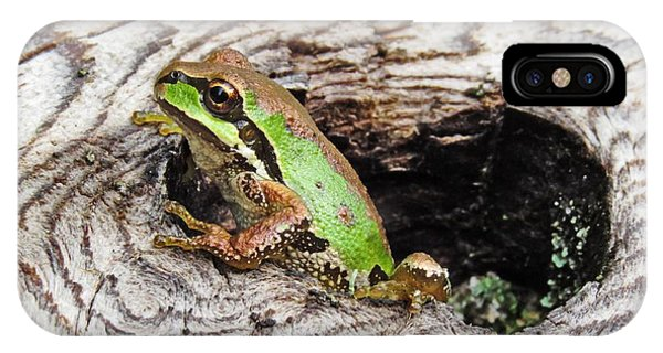 Pacific Chorus Frog IPhone Case