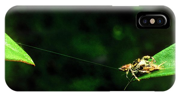 Panamanian Jumping Spider Eris Aurantia Phone Case by Martin Dohrn/science Photo Library
