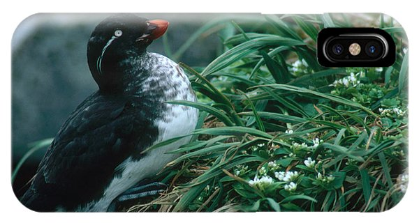 Auklets iPhone Case - Parakeet Auklet by Art Wolfe