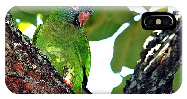Parakeet In The Park IPhone Case