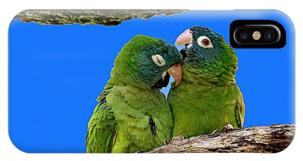 Parakeet Pair IPhone Case