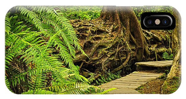 Spruce iPhone Case - Path In Temperate Rainforest by Elena Elisseeva