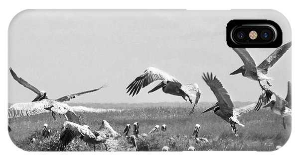 Pelicans Phone Case by Thomas Leon