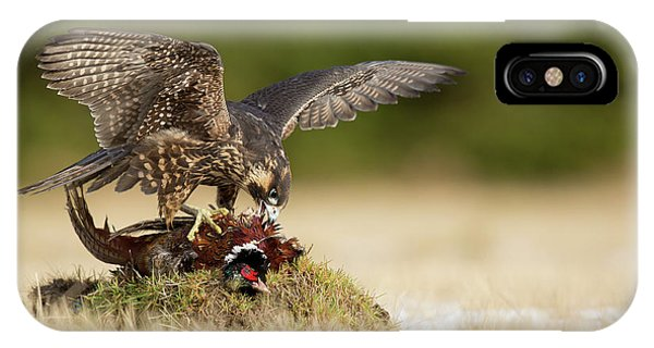Falcon iPhone Case - Peregrine Falcon by Milan Zygmunt