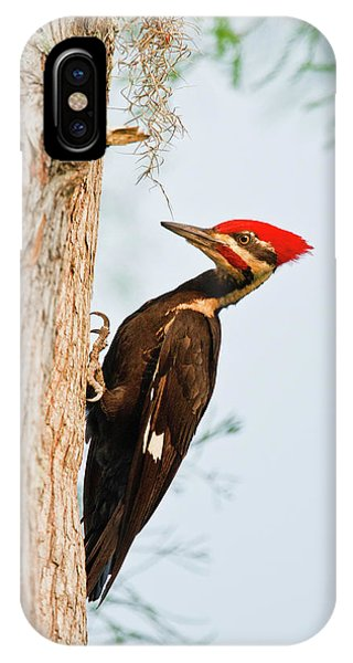 Bald Cypress iPhone Case - Piliated Woodpecker (dryocopus Pileatus by Larry Ditto