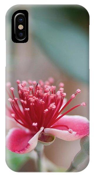 Pineapple Guava (feijoa Sellowiana) Phone Case by Maria Mosolova