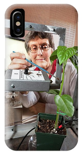 Sharpshooter iPhone Case - Plant Disease Transmission Research by Stephen Ausmus/us Department Of Agriculture