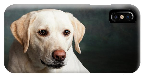 Yellow Lab iPhone Case - Portrait Of A Yellow Labrador Dog by Animal Images