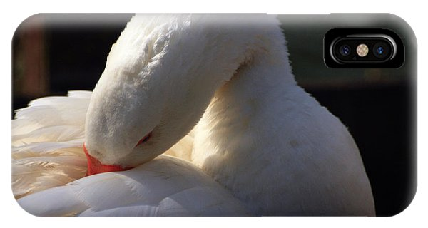 IPhone Case featuring the photograph Preening Goose by Jeremy Hayden