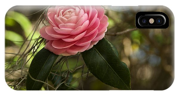 Pretty In Pink Phone Case by Frank Feliciano