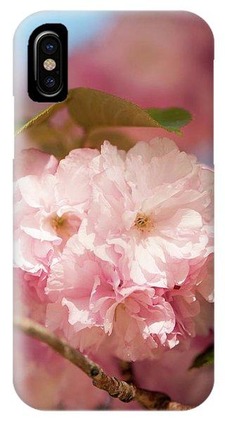 Cultivar iPhone Case - Prunus Serrulata 'kanzan' by Maria Mosolova