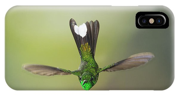 Purple-bibbed White-tip Hummingbird IPhone Case