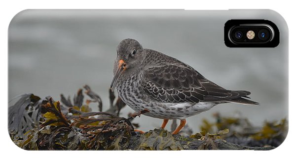 Purple Sandpiper IPhone Case
