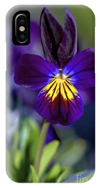 Purple Viola IPhone Case