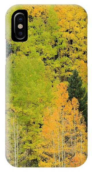 Sangre De Cristo iPhone Case - Quaking Aspens In A Fall Glow by Maresa Pryor