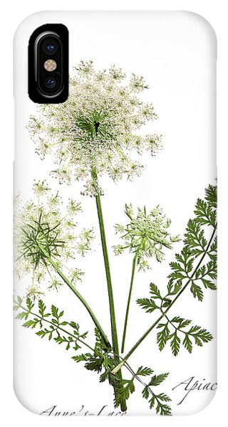 Queen-anne's-lace 2 IPhone Case