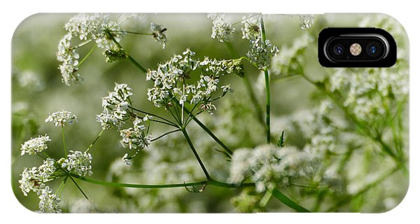 Queen Annes Lace IPhone Case