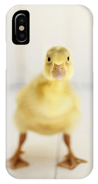 Duck iPhone Case - Ready To Rumble by Amy Tyler