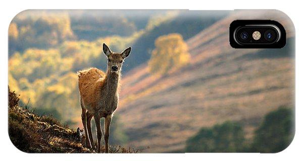Red Deer Calf IPhone Case