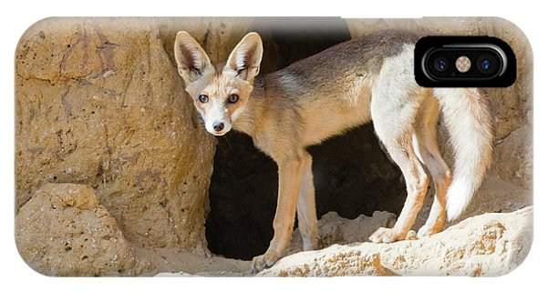 Red Fox (vulpes Vulpes) Phone Case by Photostock-israel