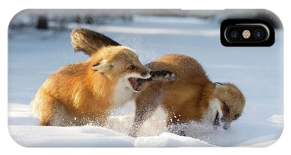 Red Foxes Interacting In Snow Phone Case by Dr P. Marazzi/science Photo Library