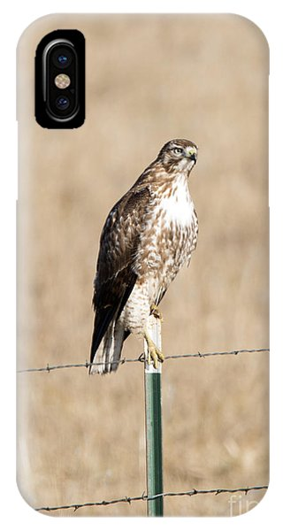 Red Tail Hawk iPhone Case - Red Tail Stare by Mike Dawson
