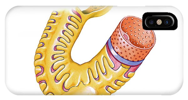 Renal Corpuscle Phone Case by Asklepios Medical Atlas