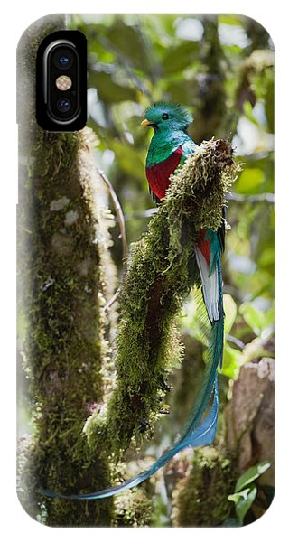 Resplendent Quetzal Male Costa Rica IPhone Case