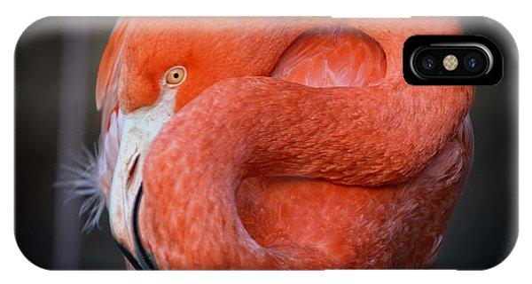 Resting Flamingo IPhone Case
