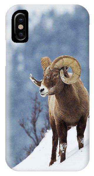 Rocky Mountain Bighorn Sheep iPhone Case - Rocky Mountain Bighorn Sheep by Ken Archer
