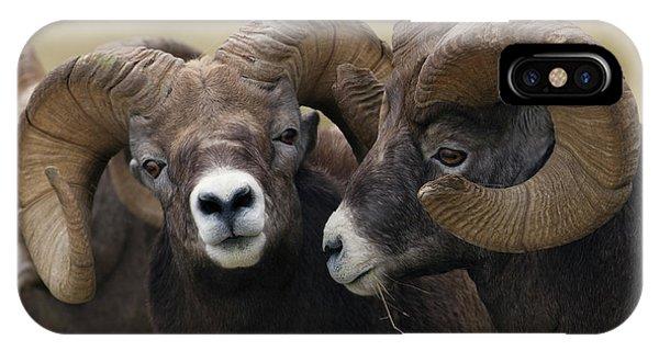 Rocky Mountain Bighorn Sheep iPhone Case - Rocky Mountain Bighorn Sheep Rams by Ken Archer