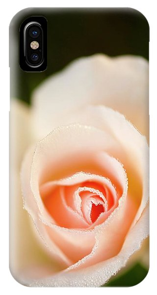 Rosa 'johann Strauss' Flower Phone Case by Maria Mosolova