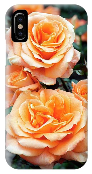Rose (remy Martin) Phone Case by Brian Gadsby/science Photo Library