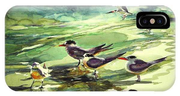 Royal Terns And Black Skimmers IPhone Case