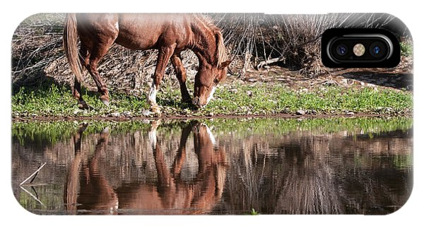 IPhone Case featuring the photograph Salt River Wild Horse by Tam Ryan