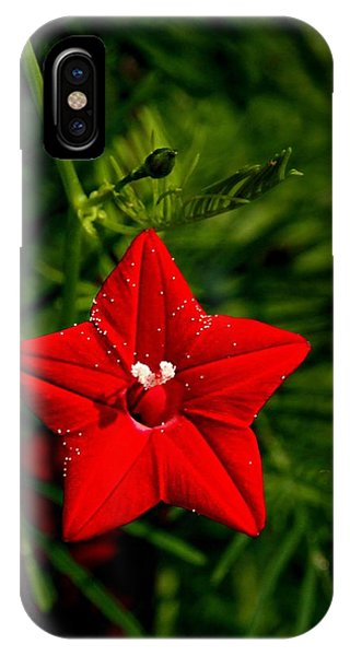 Scarlet Morning Glory IPhone Case