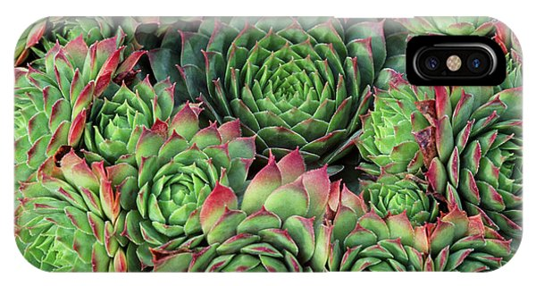 Sempervivum 'rubra Ray' Phone Case by Anthony Cooper/science Photo Library