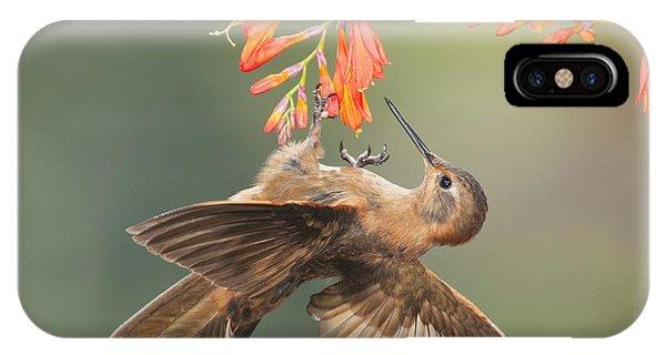 Shining Sunbeam Hummingbird IPhone Case