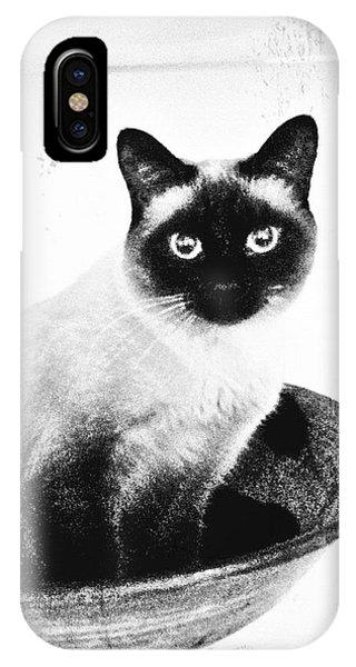 Siamese In A Bowl IPhone Case